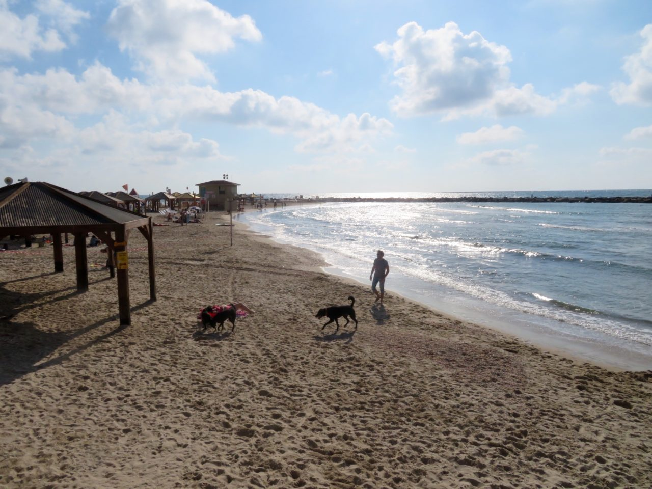 Tel Aviv Beach : Doggie Beach