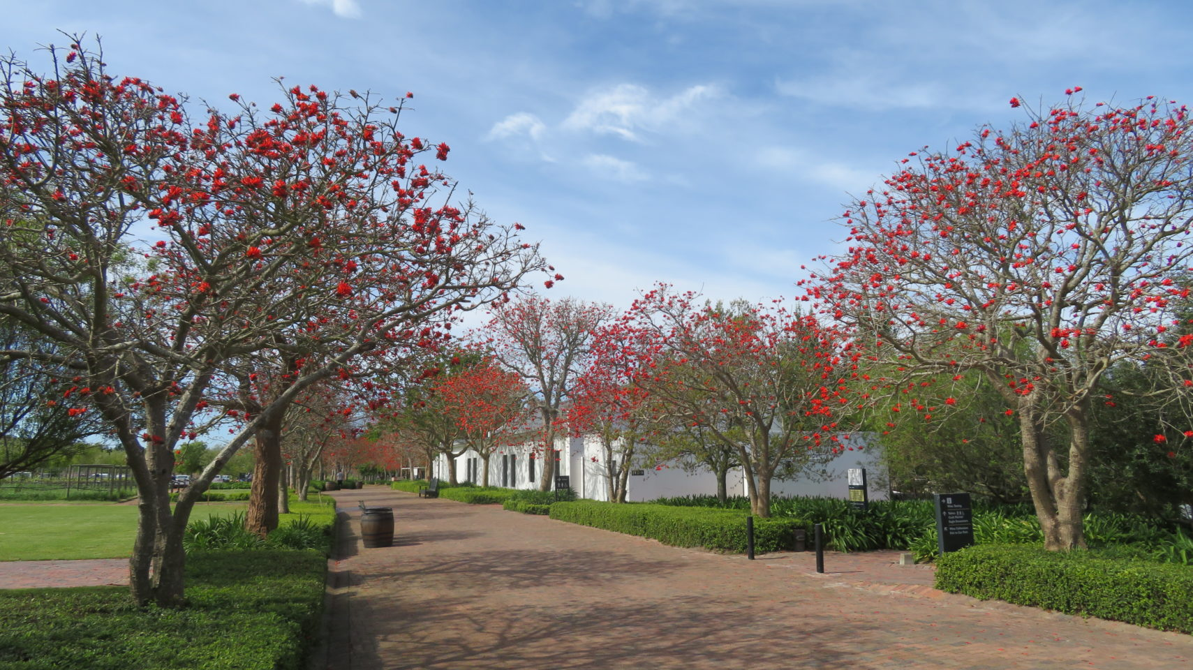 Spier Wine Farm in Stellenbosch, South Africa