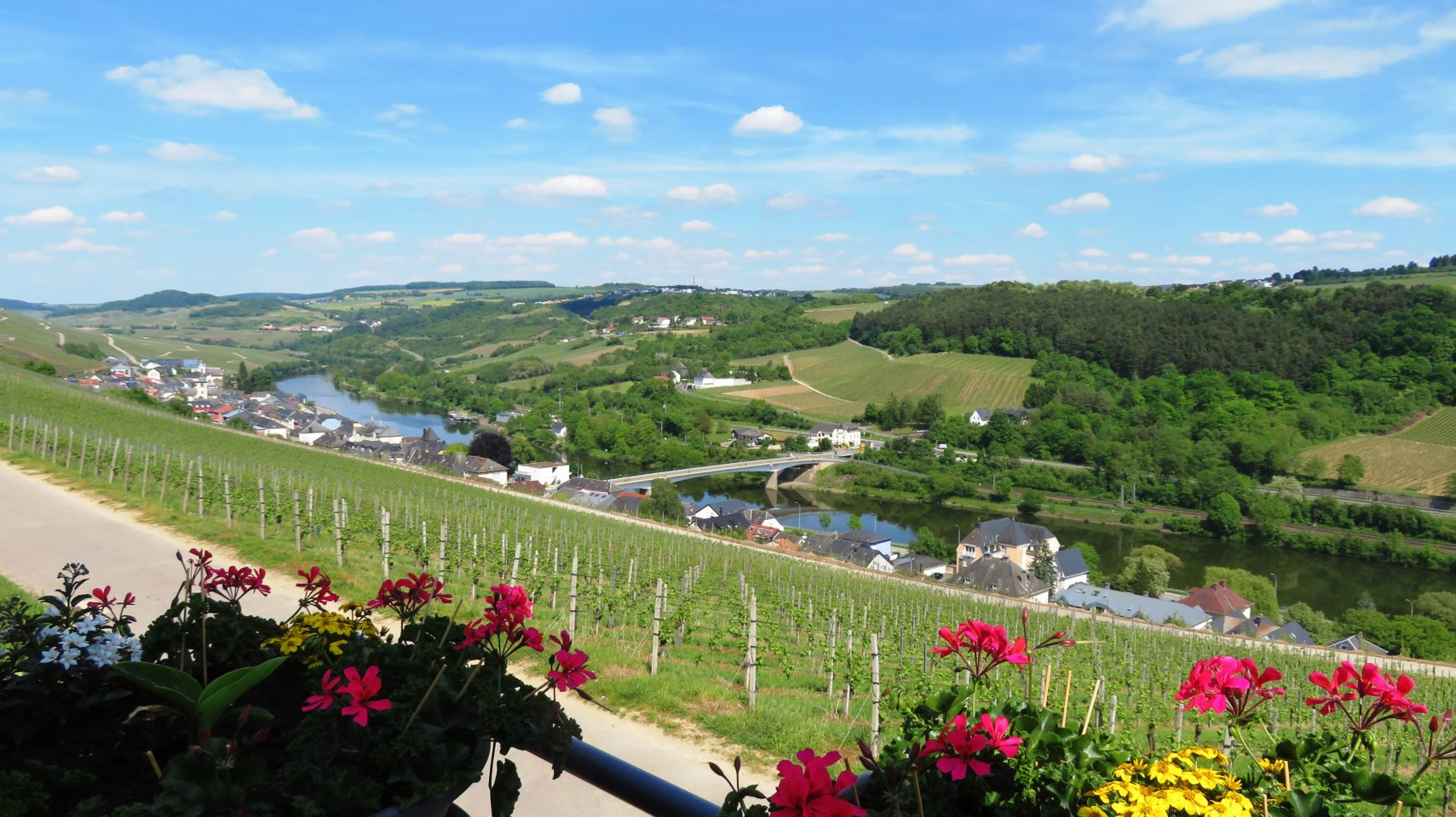 Pundel vineyard along the Moselle River in <em><strong>Luxembourg</strong></em>